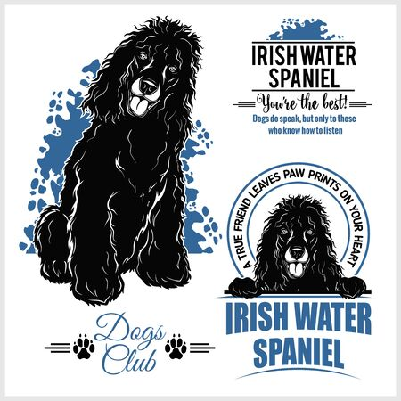 Irish Water Spaniel - vector template for t-shirt, logo and badges
