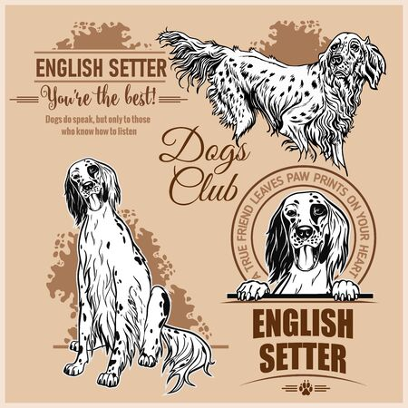 English Setter - vector set for t-shirt, logo and template badges 일러스트