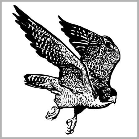 Hawk in flight vector. Predatory bird isolated on white background.