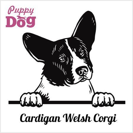 Cardigan Welsh Corgi - Peeking Dogs - tête de visage de race isolated on white