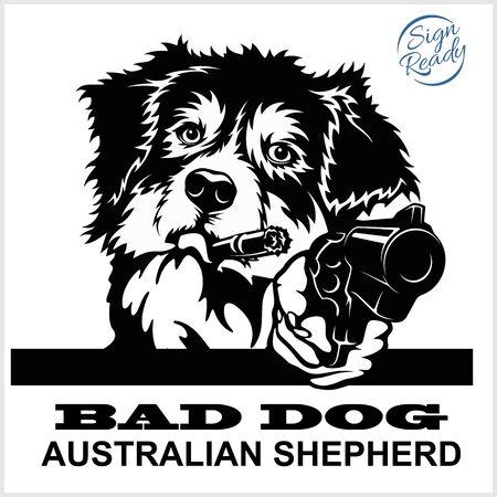 Australian Shepherd with guns - Australian Shepherd gangster.