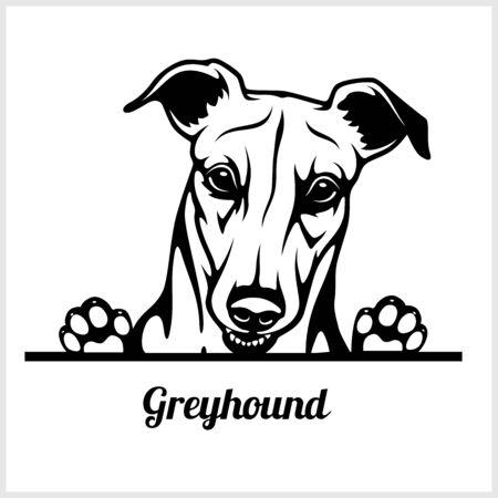 dog head, Greyhound breed, black and white illustration