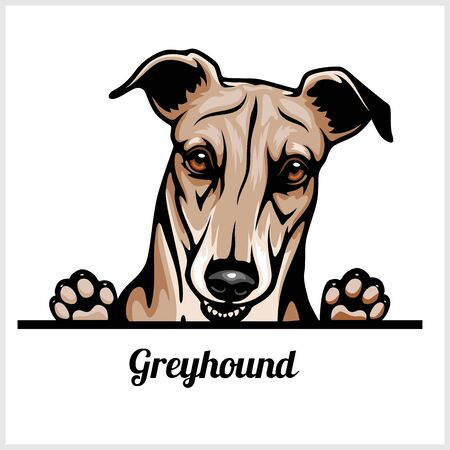 Color dog head, Greyhound breed on white background