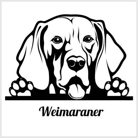 dog head, Weimaraner breed, black and white illustration 矢量图片
