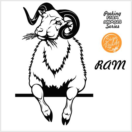 Peeking RAM chews hay - Cheerful RAM peeking out - face head isolated on white