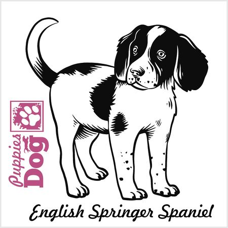 English Springer Spaniel puppy. Drawing by hand, sketch. Engraving style, black and white vector image.