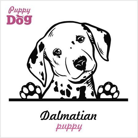 Puppy Dalmatian - Peeking Dogs - breed face head isolated on white Ilustração