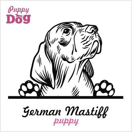 Puppy German Mastiff - Peeking Dogs - breed face head isolated on white