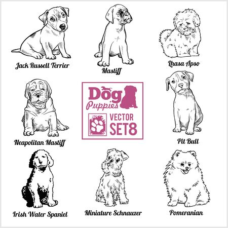 Dog Puppies - Vector set. Funny dogs puppy pet characters different breads doggy. 向量圖像