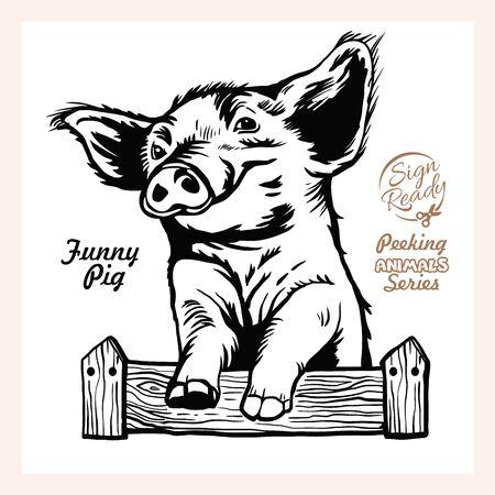 Peeking Funny Pig - Funny Pig peeking out - face head isolated on white Ilustração