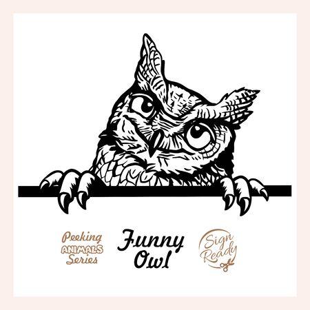 Peeking Funny Owl - Funny Owl peeking out - face head isolated on white
