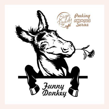 Peeking Funny Donkey - Funny Donkey peeking out - face head isolated on white Vettoriali