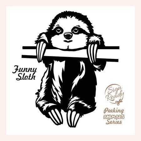 Peeking Funny Sloth - Funny Sloth peeking out - face head isolated on white