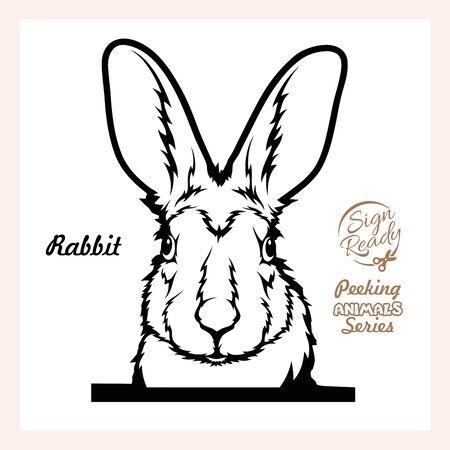 Peeking Rabbit - Funny Rabbit peeking out - face head isolated on white