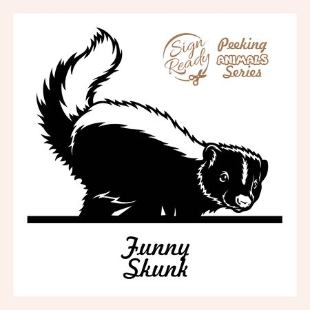Skunk lifted its tail - Funny Skunk peeking out - face head isolated on white