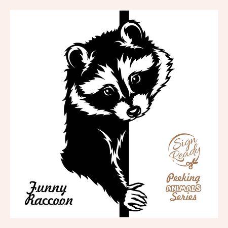 Peeking Raccoon - Funny Raccoon peeking out - face head isolated on white Ilustração