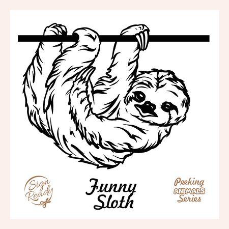 Peeking Funny Sloth - Funny Sloth peeking out - face head isolated on white Ilustração