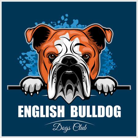 English Bulldog - Peeking Dogs - breed face head isolated on blue