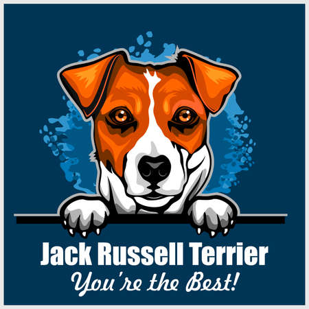Jack Russell Terrier - Peeking Dogs - breed face head isolated on blue Ilustração