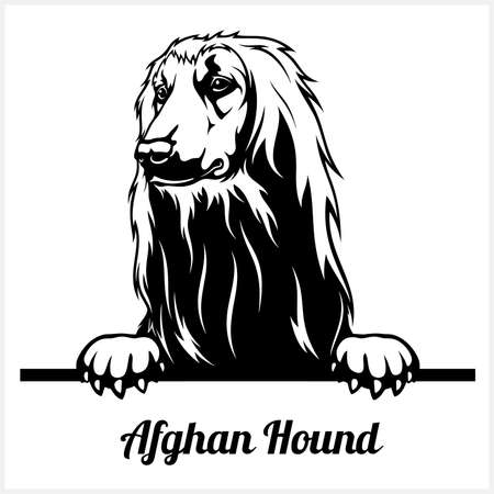 Afghan Hound - Peeking Dogs - breed face head isolated on white