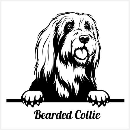 Bearded Collie - Peeking Dogs - breed face head isolated on white
