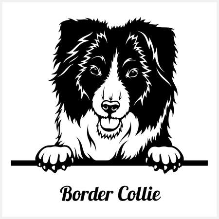 Border Collie - Peeking Dogs - breed face head isolated on white