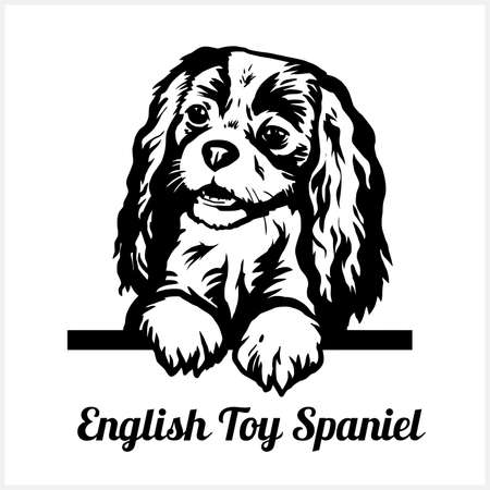 English Toy Spaniel - Peeking Dogs - breed face head isolated on white
