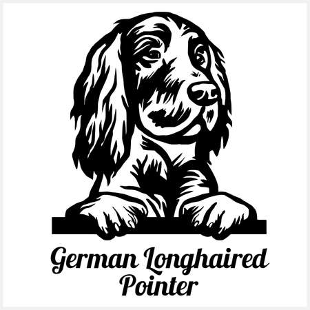German Longhaired Pointer - Peeking Dogs - breed face head isolated on white