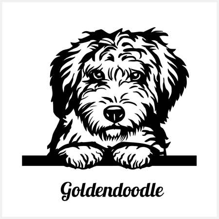 Goldendoodle - Peeking Dogs - breed face head isolated on white Vector Illustration