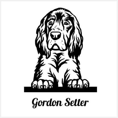 Gordon Setter - Peeking Dogs - breed face head isolated on white