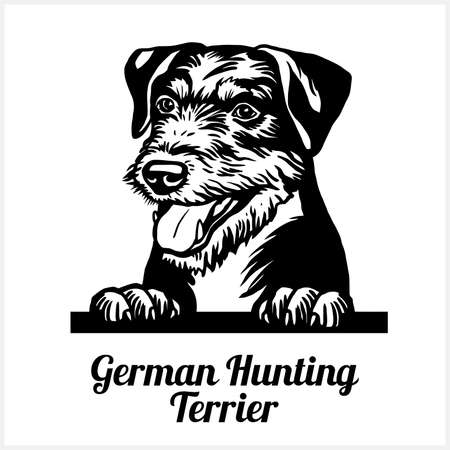 German Hunting Terrier - Peeking Dogs - breed face head isolated on white