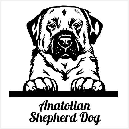 Anatolian Shepherd Dog - Peeking Dogs - breed face head isolated on white