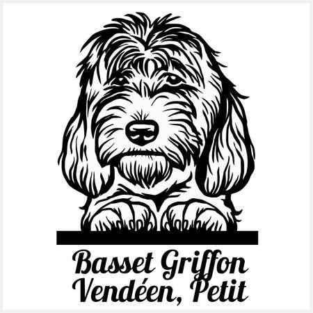 Basset Griffon Vendeen, Petit - Peeking Dogs - breed face head isolated on white