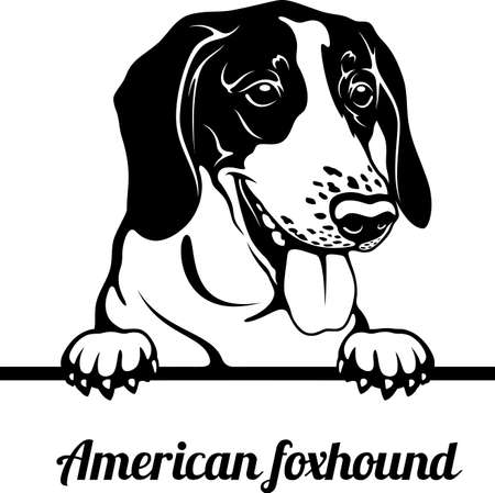 American Foxhound - Peeking Dogs - breed face head isolated on white