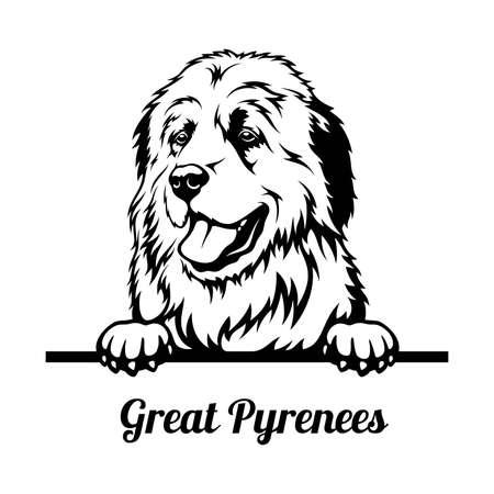 Peeking Dog - Great Pyrenees breed - head isolated on white