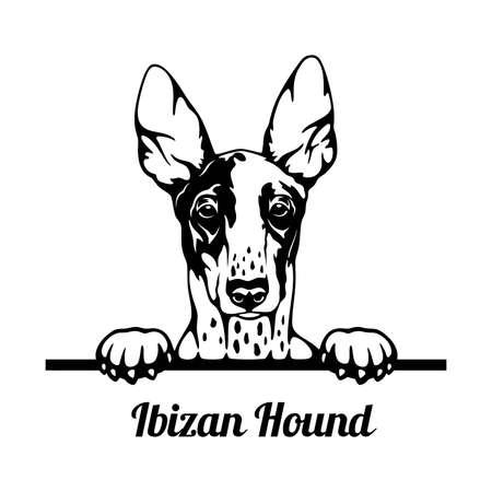Peeking Dog - Ibizan Hound breed - head isolated on white Vector Illustration