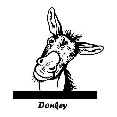 Peeking Funny Donkey - Funny Donkey peeking out - face head isolated on white Vecteurs