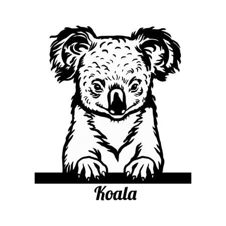 Koala animal face. Vector Australian cute head of marsupial bear. Funny peeking animals 向量圖像