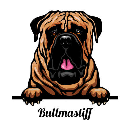 Bullmastiff - Color Peeking Dogs - breed face head isolated on white