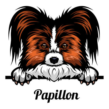 Head Papillon - dog breed. Color image of a dogs head isolated on a white background