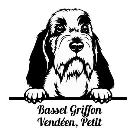 Peeking Dog - Basset Griffon Venden, Petit breed - head isolated on white