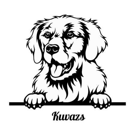 Peeking Dog - Kuvazs breed - head isolated on white