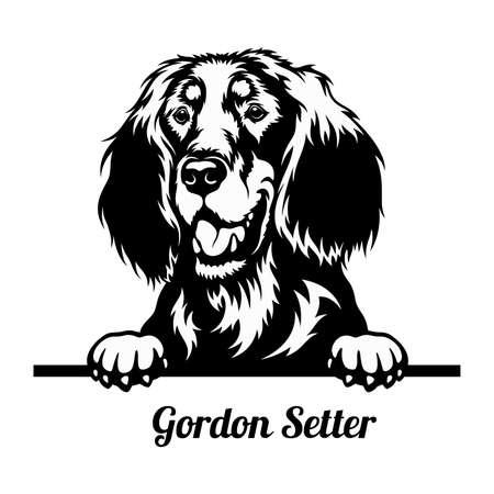 Peeking Dog - Gordon Setter breed - head isolated on white 矢量图像