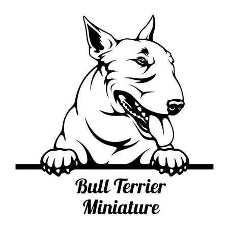 Peeking Dog - Bull Terrier Miniature breed - head isolated on white