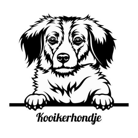 Peeking Dog - Kooikerhondje breed - head isolated on white