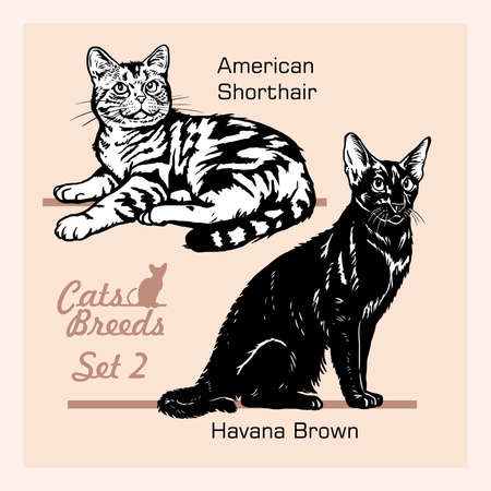 Cat Breeds - American Shorthair, Havana Brown - Cheerful cats isolated on white - vector set