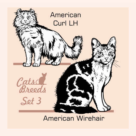 Cat Breeds - American wirehair, American Curl LH - Cheerful cats isolated on white - vector set