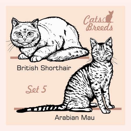 Cat Breeds - Arabian Mau, British Shorthair - Cheerful cats isolated on white - vector set 矢量图像