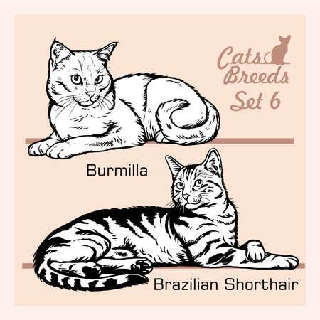 Cat Breeds - Brazilian Shorthair, Burmilla - Cheerful cats isolated on white - vector set