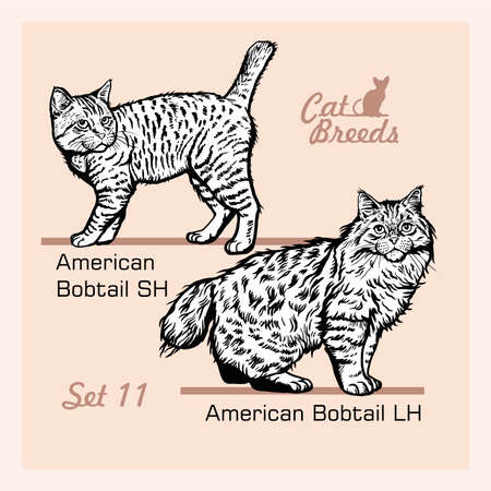Cat Breeds - American Bobtail LH, American Bobtail SH - Cheerful cats isolated on white - vector set  イラスト・ベクター素材